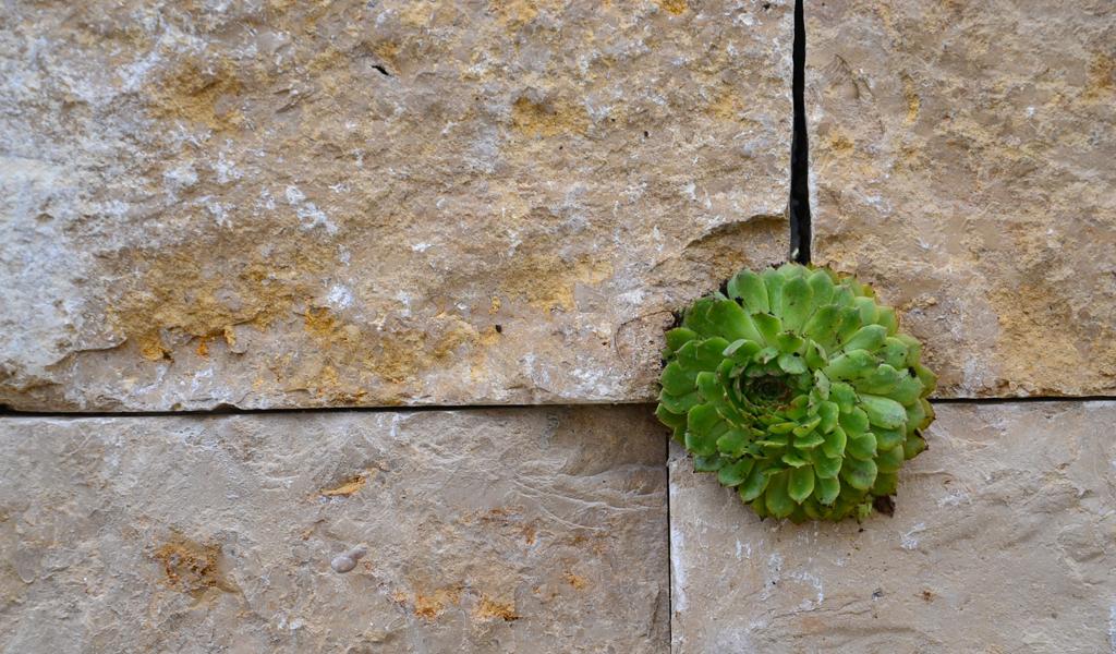 garten r. zollikofen - gartengestaltung gartenbau riggenbach bern, Garten ideen